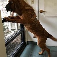 Adopt A Pet :: Cletus - Cincinnati, OH