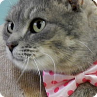 Adopt A Pet :: Molly - Bucyrus, OH