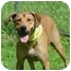 Photo 4 - Labrador Retriever/Vizsla Mix Dog for adoption in Milwaukee, Wisconsin - Sanders
