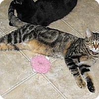 Adopt A Pet :: Jag - Grand Rapids, MI