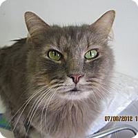 Adopt A Pet :: Smoky Joe - Bunnell, FL