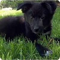 Adopt A Pet :: Daisy - Belleville, MI