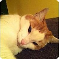 Adopt A Pet :: Saint (LE) - Little Falls, NJ
