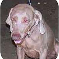 Adopt A Pet :: Louisa - Eustis, FL