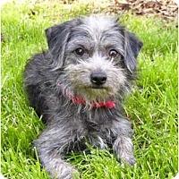 Adopt A Pet :: Slater - Mocksville, NC