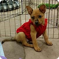 Adopt A Pet :: Rupert - Phoenix, AZ
