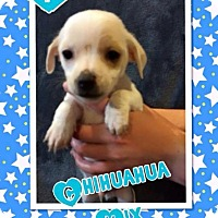 Adopt A Pet :: Popeye - Rancho Cucamonga, CA