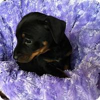 Adopt A Pet :: Faulkner - Austin, TX
