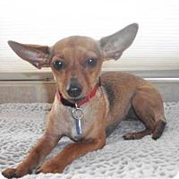 Adopt A Pet :: Kona - Costa Mesa, CA