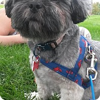 Adopt A Pet :: HANK - Eden Prairie, MN