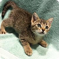 Adopt A Pet :: Callie - Watkinsville, GA