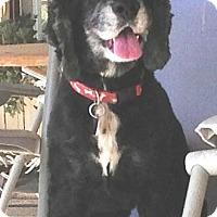 Adopt A Pet :: Missy - Santa Barbara, CA