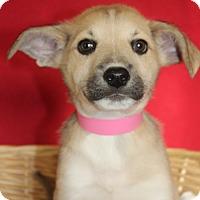 Adopt A Pet :: Pam - Waldorf, MD