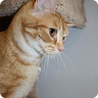 Adopt A Pet :: Cutie Pie - Burlington, WA