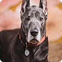 Adopt A Pet :: Oslo - Portland, OR