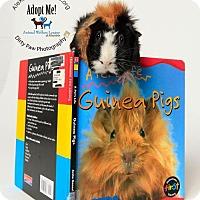 Adopt A Pet :: Zomba - Alexandria, VA