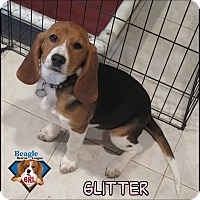 Adopt A Pet :: Glitter - Yardley, PA