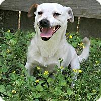 Adopt A Pet :: Siracha - Lufkin, TX