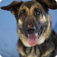 Adopt A Pet :: Odessa - Bradenton, FL