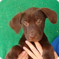 Adopt A Pet :: Krista - Oviedo, FL
