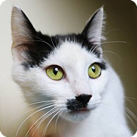 Adopt A Pet :: Josephine - Ann Arbor, MI
