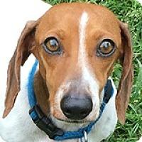 Adopt A Pet :: Sparkles Par - Houston, TX
