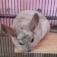 Adopt A Pet :: Petrie - Granby, CT