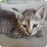 Adopt A Pet :: Sadie - Crocker, MO