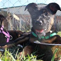 Adopt A Pet :: Danny - Mocksville, NC
