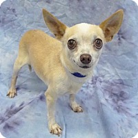 Adopt A Pet :: Dante - Hawthorne, CA