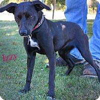 Adopt A Pet :: Izzy - Beacon, NY