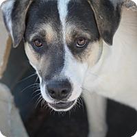 Adopt A Pet :: Yodel - Hooksett, NH