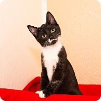 Adopt A Pet :: Dax - Seville, OH