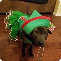 Adopt A Pet :: Starla in TX - adopt pending - Mira Loma, CA