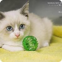 Adopt A Pet :: Bones - Nassau Bay, TX