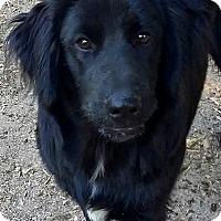 Adopt A Pet :: Buddy - Springfield, MA
