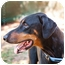 Photo 3 - Doberman Pinscher Dog for adoption in Santee, California - Mojo