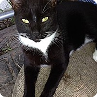 Adopt A Pet :: Tux - Miami, FL