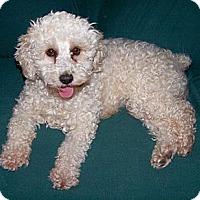 Adopt A Pet :: Casey - San Angelo, TX