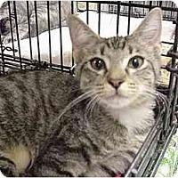 Adopt A Pet :: Fiona Finnegan - The Colony, TX
