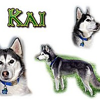 Adopt A Pet :: Kai - Seminole, FL