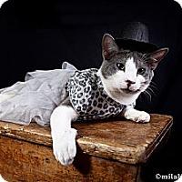 Adopt A Pet :: Prince - Bonita Springs, FL