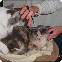 Adopt A Pet :: Nita - Pendleton, OR