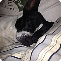 Adopt A Pet :: Dino - Hilliard, OH