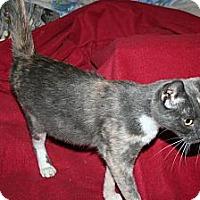 Adopt A Pet :: Belladonna - Santa Rosa, CA