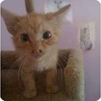 Adopt A Pet :: Felix - Mobile, AL