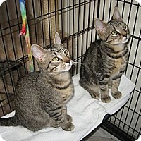 Adopt A Pet :: BILLY & BOBBY - Hamilton, NJ