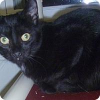 Adopt A Pet :: Kalette - Hamburg, NY