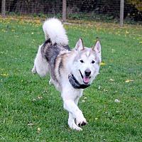 Adopt A Pet :: DJ - Sycamore, IL