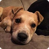 Adopt A Pet :: Declan - nashville, TN